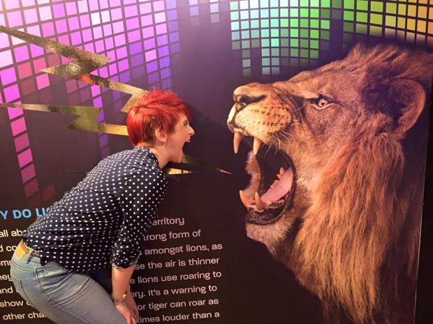 me v lion